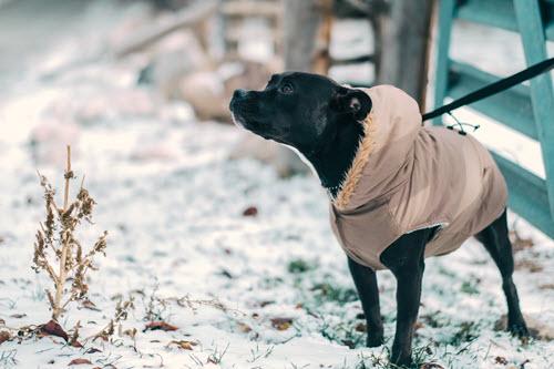 dog-fashion-snow