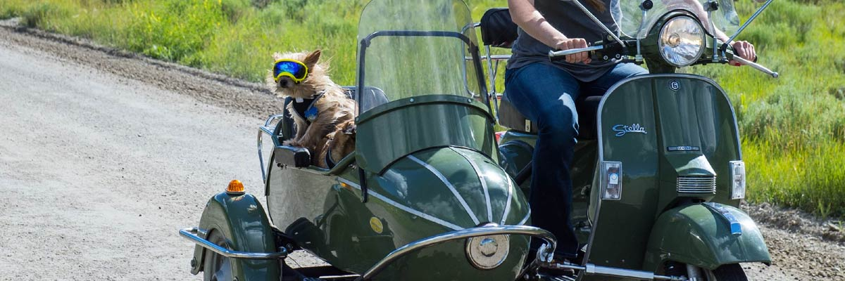 Dog in motorcycle sidecar wearing rex specs