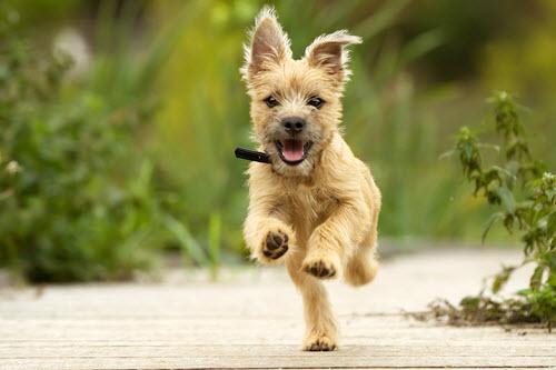 active-dog