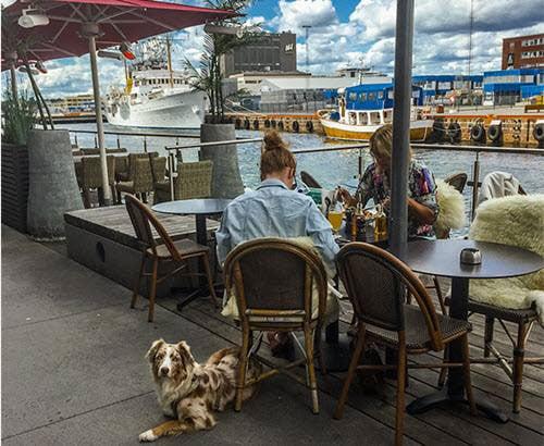dog-establishments