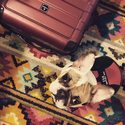 dog-next-to-luggage