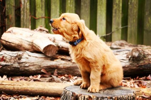 dog-speak-decoding-barks-howls-whines-body1