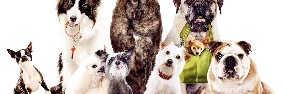 Group shot of dogs from Hotel for dogs