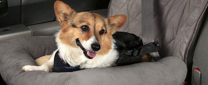 The Car Cuddler
