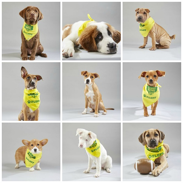collage of nine dogs on Team Fluff for the 2019 Puppy Bowl