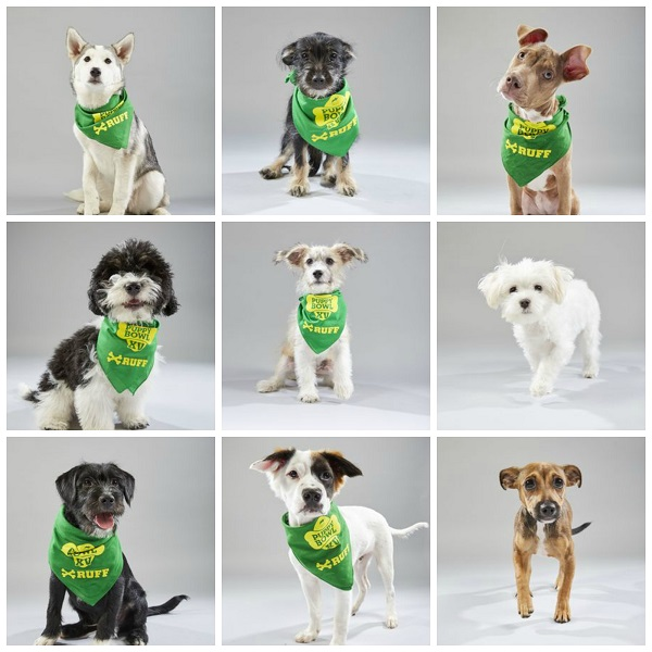 collage of the first nine dogs on Team Ruff for the 2019 Puppy Bowl