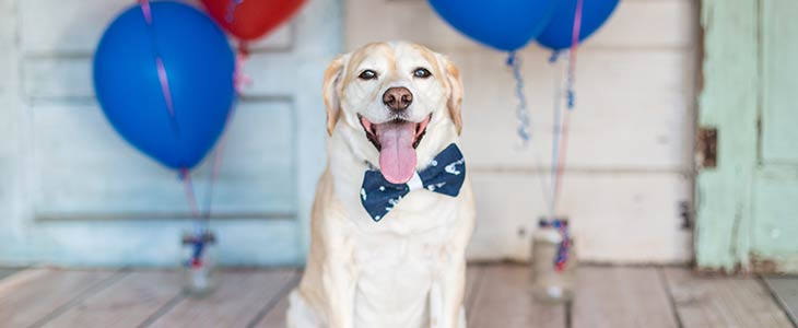 happy dog wearing a bow tie and sitting on a porch with balloons in the background