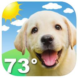 weather-puppy-app