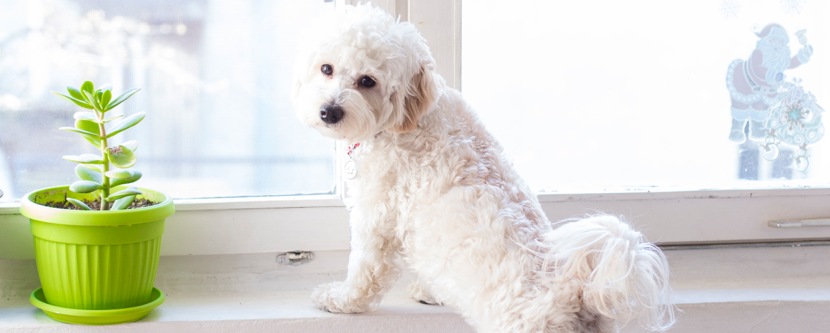back-to-school-daze-easing-your-dogs-separation-anxiety