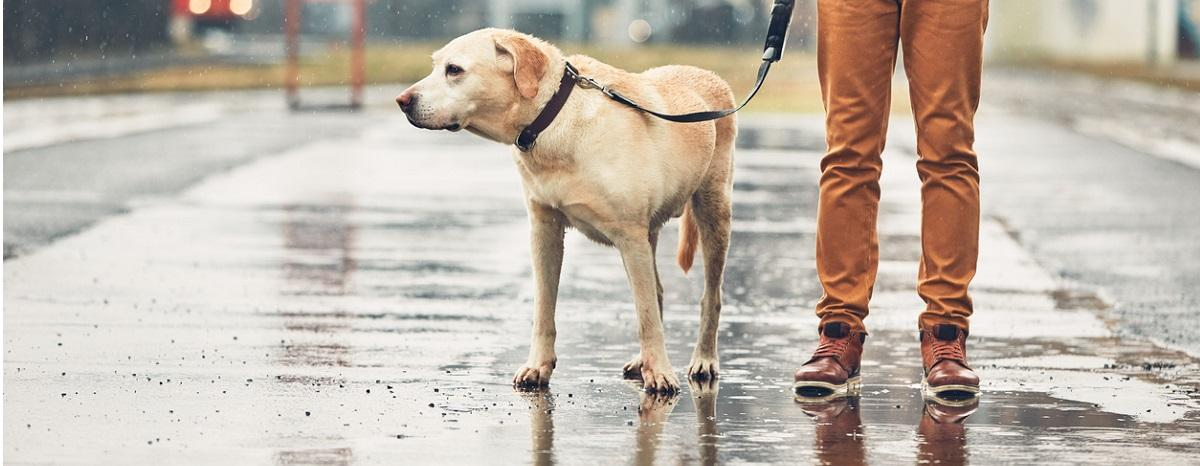 can-your-dog-predict-the-weather-hero
