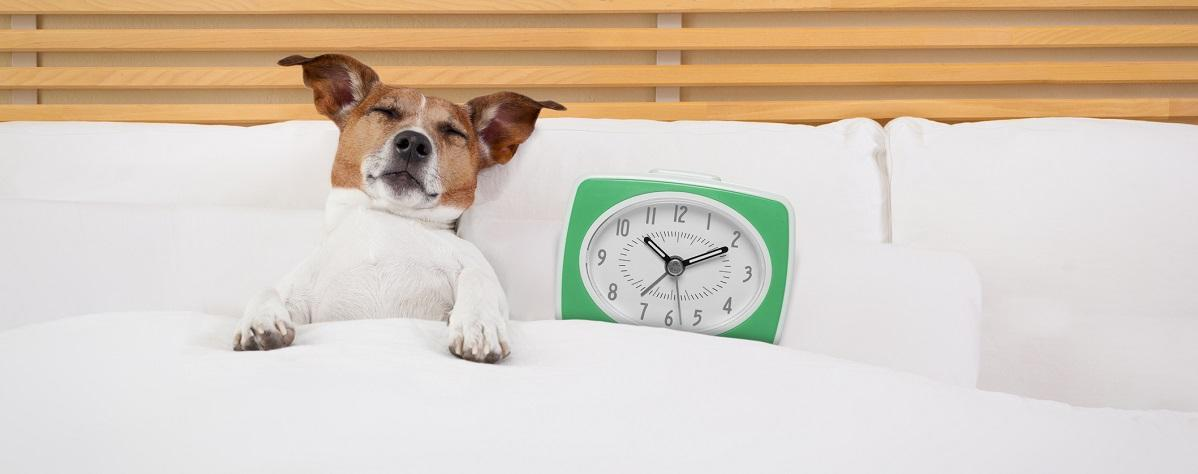 dog-and-clock-sleeping