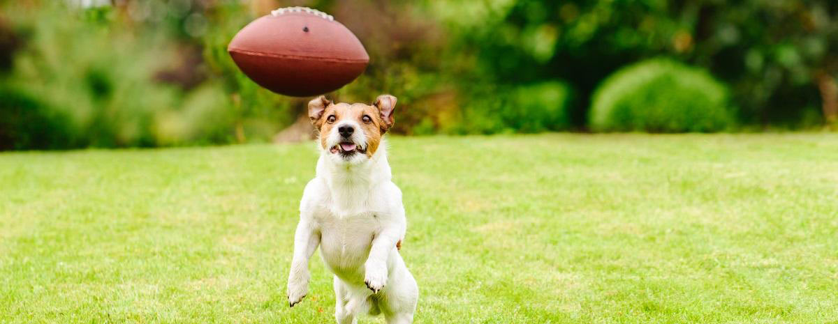 dog-football-hero