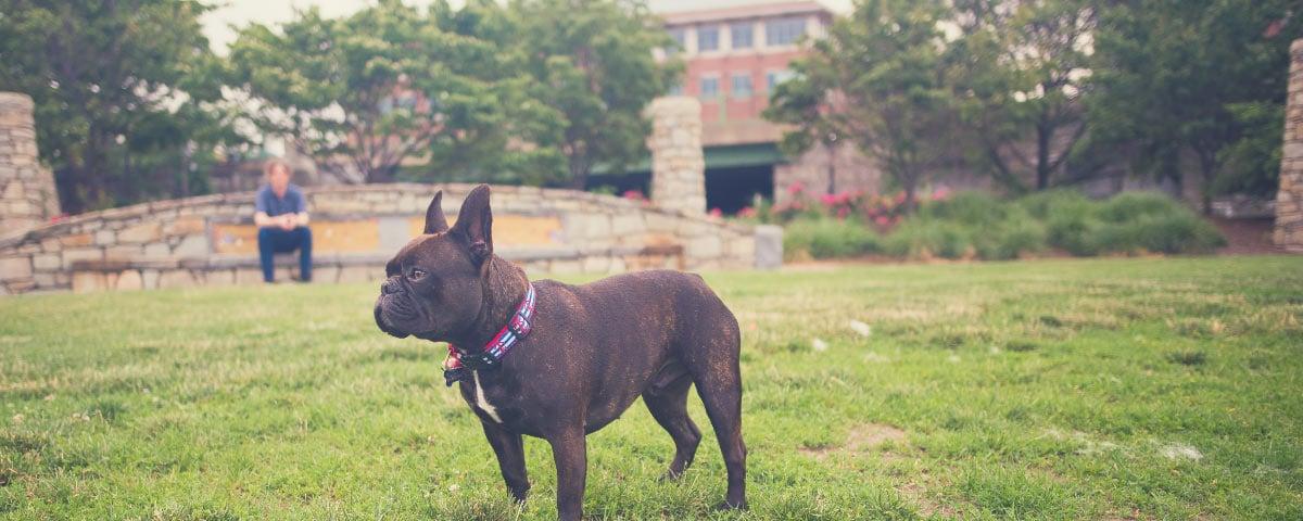 dog-friendly-boston-hero