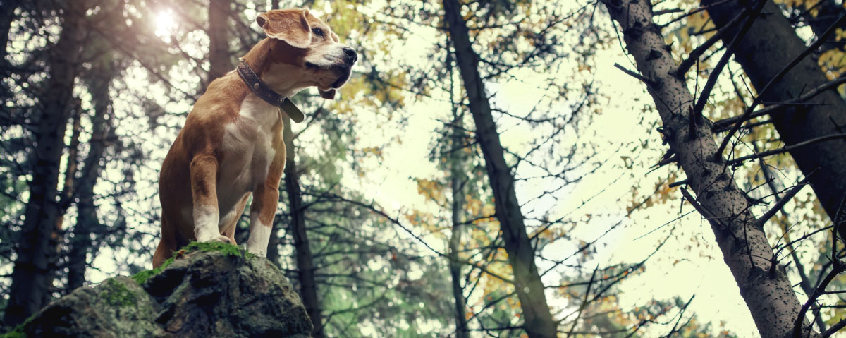 dog-friendly-national-parks-hero