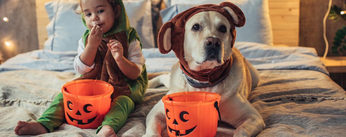 dog-halloween-prep-hero