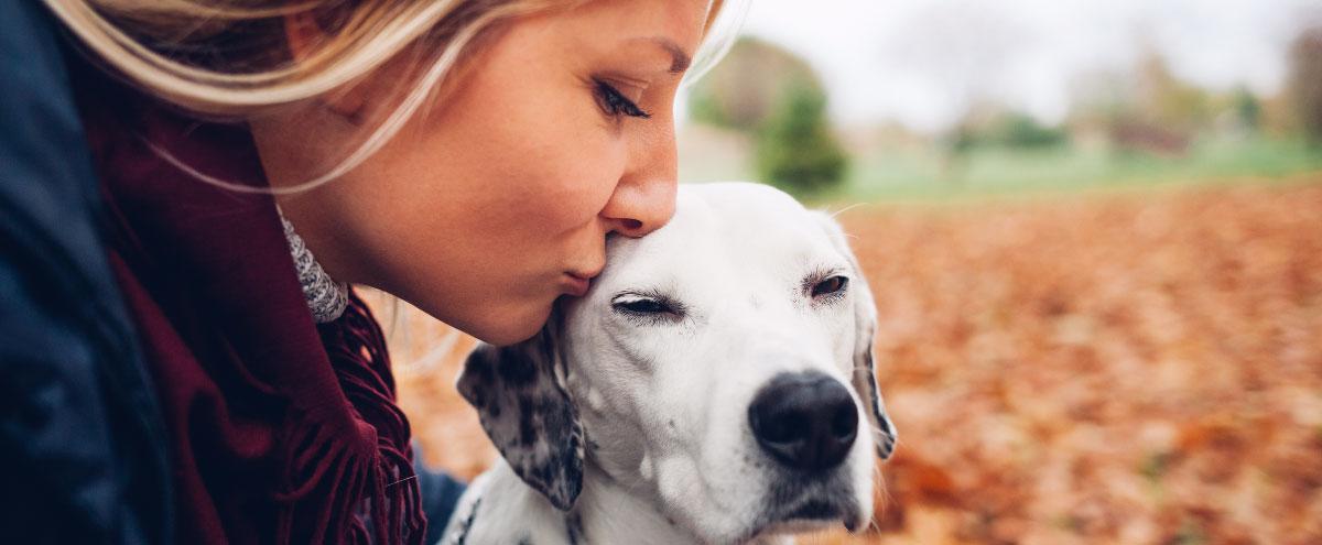 dog-insurance-hero