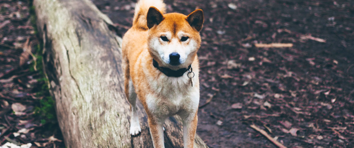 dogparks-hero