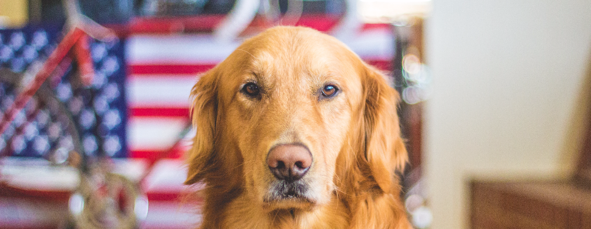 fireworks-and-fido-complete-guide-to-dog-safety-hero