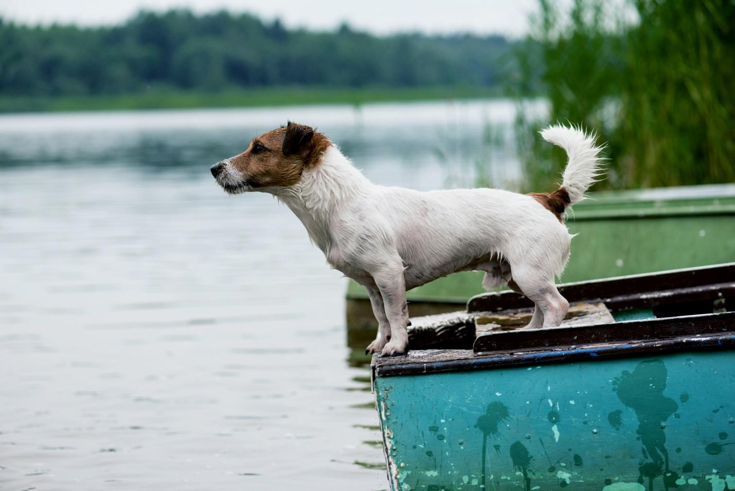 heres-how-to-teach-your-dog-to-swim-hero