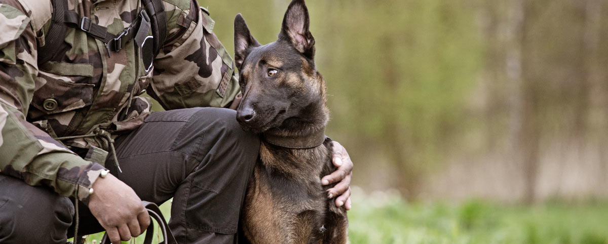 honoring-k9-veterans-hero-1