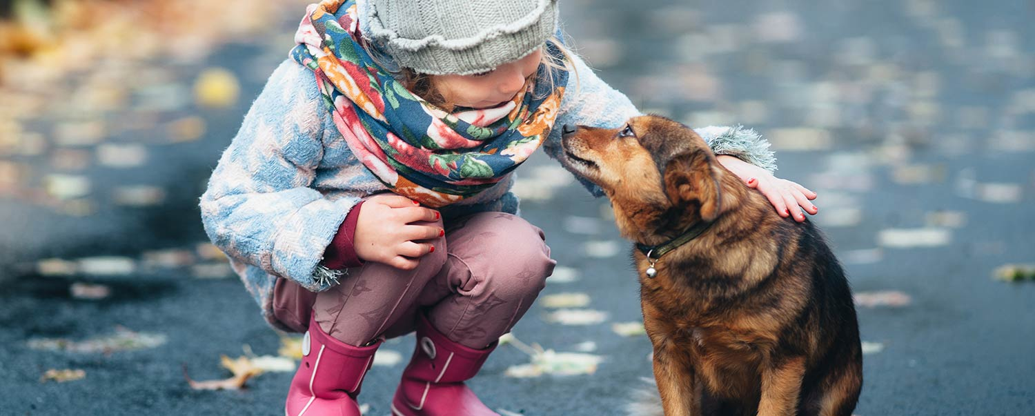how-to-help-pets-and-pet-parents-in-the-holiday-season-hero
