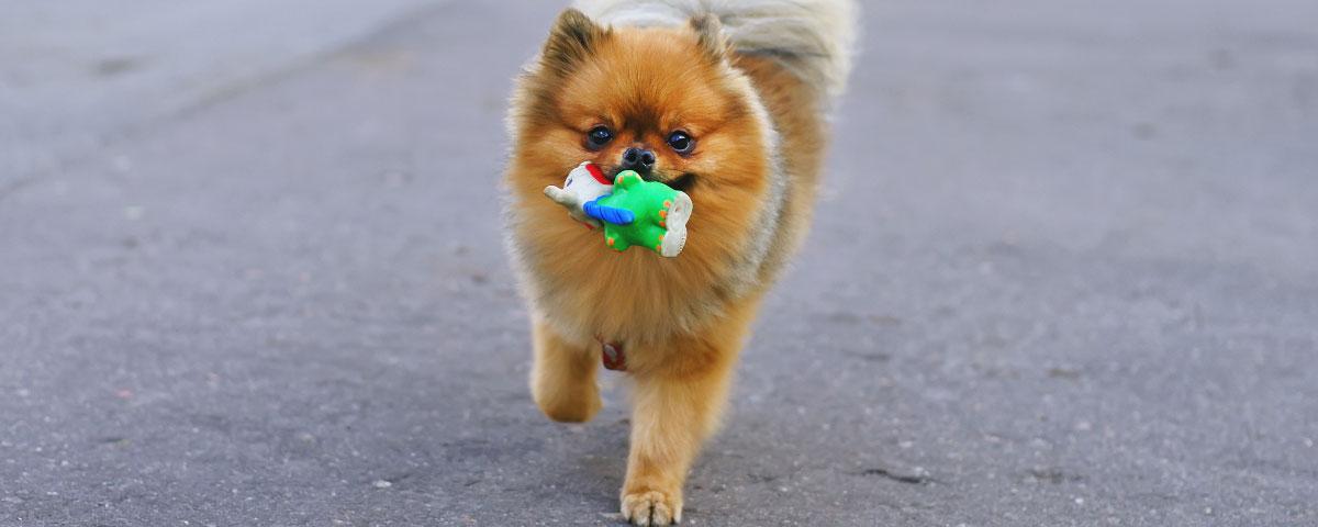 old-dog-toy-hero