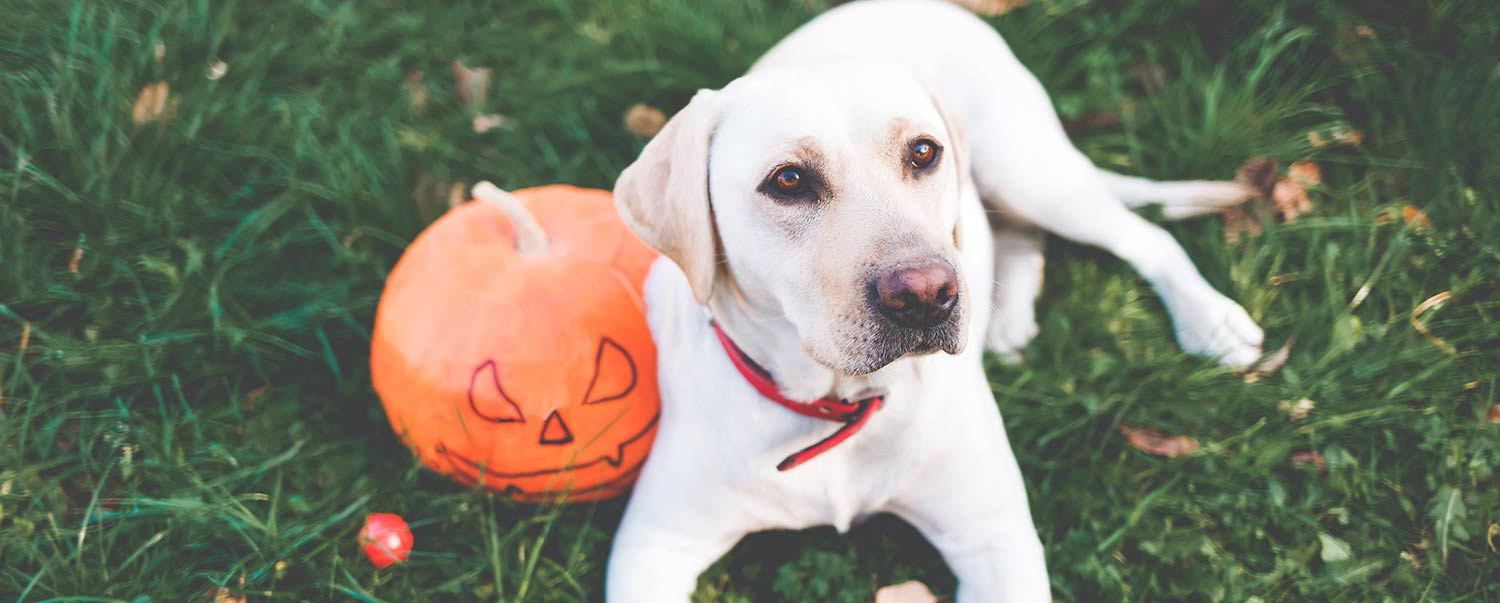 should-your-dog-eat-pumpkin-hero_article