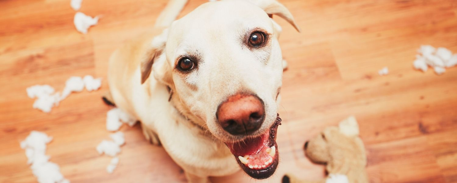 How to Clean the Most Common Dog Messes