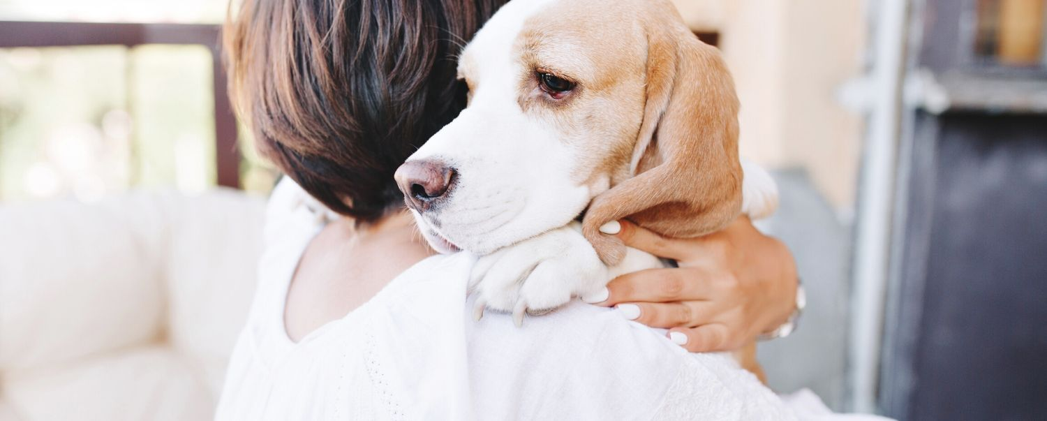 How to Help Reduce Your Dog's Stress